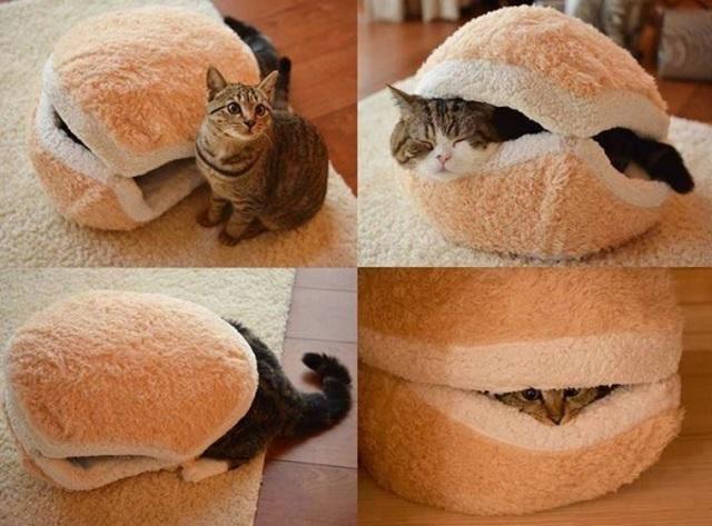 1431791774 catburger