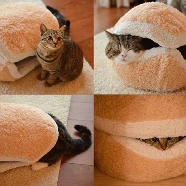 มาสร้างพื้นที่สำหรับคนรักแมวกันเถอะ!