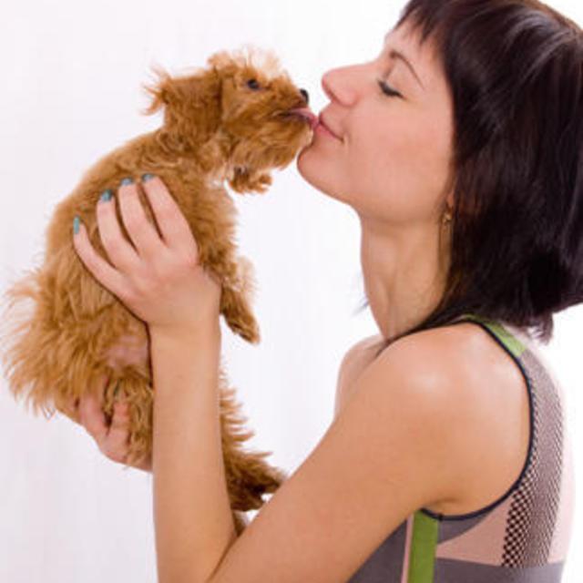 """อุ๊บส์! 18 เหตุผลที่ """" มีหมา """" ดีกว่า """" มีแฟน """" !!!"""