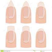 Icon 1428593966 nail shapes manicure shape white background 30936398